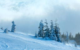 Icy snowy fir trees on winter hill. Stock Photos