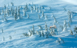 Icy snowy fir trees on winter hill. Stock Photography