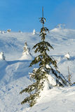 Icy snowy fir trees on winter hill. Stock Images