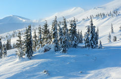 Icy snowy fir trees on winter slopel. Stock Images