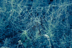 Icy spider web in the grass on blue background Royalty Free Stock Photos