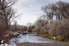 Icy stream with bare deciduous trees and overcast skies. Royalty Free Stock Image