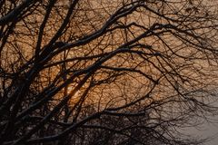 Icy Sunset. Close-up branches of tree covered with snow against stunning sunset with orange tones, winter natural. Close-up branches of tree covered with snow Royalty Free Stock Photo