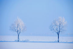 Icy tree. Two snowy and icy white trees in winter landscape royalty free stock images