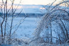 Icy tree braches. Icy tree branches in a winter ice storm stock image