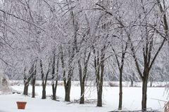 Icy tree braches. Icy tree branches in a winter ice storm royalty free stock images