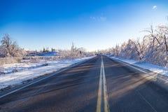 Icy tree braches Stock Image