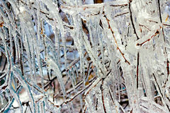 Icy tree branches Stock Images