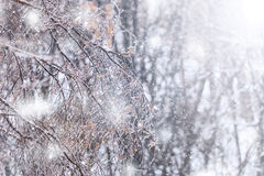 Icy tree branches Royalty Free Stock Image