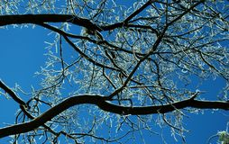Icy Tree Branches 1. Ice covered tree branches against a winter sky Royalty Free Stock Photos