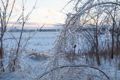 Icy tree branches and icy snowman Stock Image