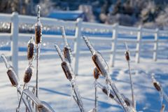 Icy tree branches and icy snowman Royalty Free Stock Image