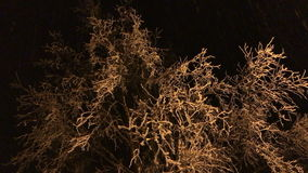 Icy tree branches sway in the wind at night. stock video