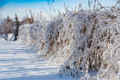 Icy tree braches Royalty Free Stock Image