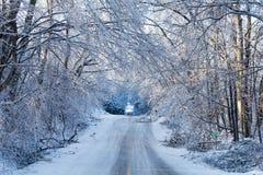 Icy tree braches Stock Photo