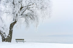Icy Tree on an Icy Lake III Royalty Free Stock Image