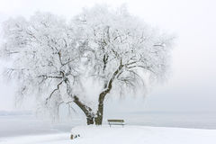 Icy Tree on an Icy Lake Royalty Free Stock Photos