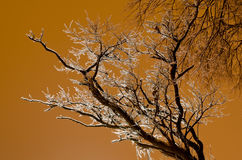 Icy tree without leaves on golden background Stock Image
