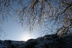 Icy tree with low sun Stock Photo