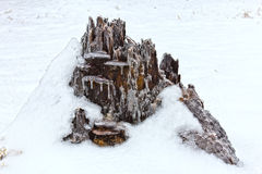Icy tree stump looks like mountain Stock Image