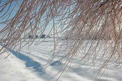 Icy tree after a winter storm Royalty Free Stock Photos