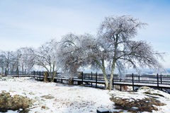 Icy trees at the Boardwalk - a consequence of freezing rain. The observation deck at Petit Jean, Arkansas, United States Royalty Free Stock Photos