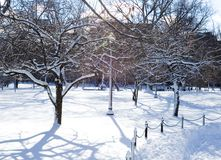 Icy Trees in the Park Stock Images
