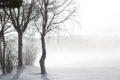 Icy trees in the snow with nascen fog Royalty Free Stock Image