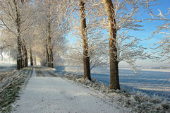 Icy trees on top of dutch dike Stock Photos