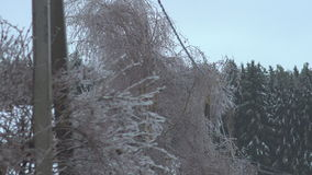 Icy trees torn wires. Freezing rain stock footage