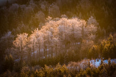 Icy trees in the valley Royalty Free Stock Image