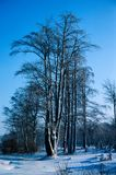 Icy trees. Winter forest, snow landscape stock image