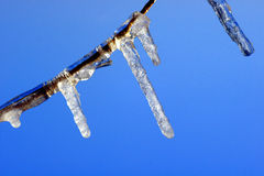 Icy twig Stock Photos