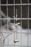 Icy twig Stock Image