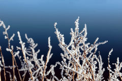 Icy twigs and branches in frosty snow against blue Stock Photo