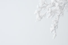 Icy twigs on white. Icy twigs or branches on white Wintry background with copy space Stock Images