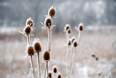 icy växter Royaltyfri Fotografi
