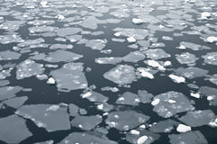 icy vatten för antarctic royaltyfri bild