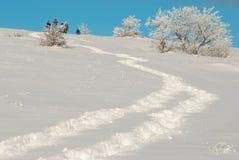 icy vinter för skog Royaltyfria Bilder