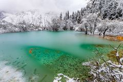 Free Icy Water In Colored Lake In The Winter Royalty Free Stock Photo - 102849905