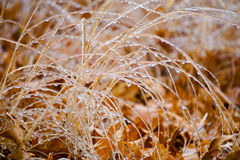 Icy winter bush with blurry background Royalty Free Stock Images