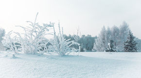 Icy winter quay. Icy winter embankment covered with snow. Russia, Yaroslavl Stock Photography