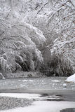 Icy Winter River. An icy river, surrounded by snow covered branches Royalty Free Stock Photo