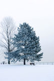 Icy winter scene Royalty Free Stock Image