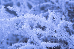 Icy world Stock Images