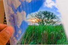 Idé, miljön, träd och himmel. Arkivbild