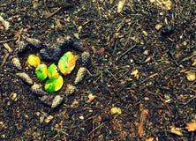 Idée créative d'automne de concept de coeur de cônes de pin avec l'endroit pour le texte photo libre de droits