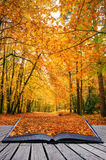 Idée créatrice de concept de forêt d'automne d'automne Image stock