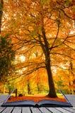 Idée créatrice de concept de forêt d'automne d'automne Image libre de droits