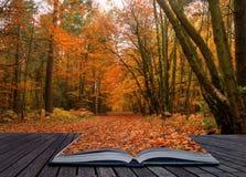 Idée créatrice de concept de scène de forêt d'automne d'automne Images libres de droits